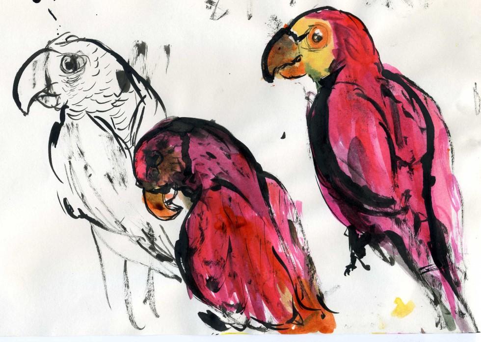 Sketch of Parrots